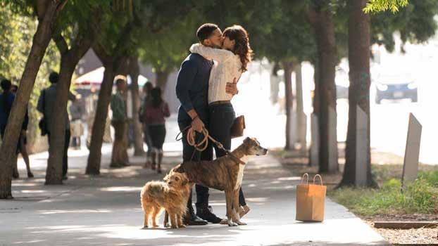 film dog days icona
