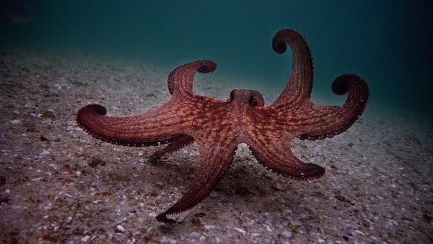 il mio amico in fondo al mare film netflix
